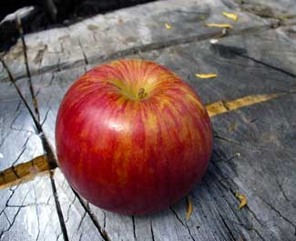 MooScience, apples are more acidic than acid whey.